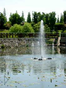 噴水、ハスの池